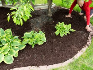 Lawn Fertilising Services Sydney