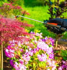 Gardening Services Northern NSW
