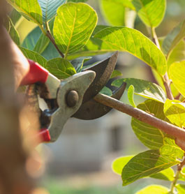 Gardening Services Tuncurry