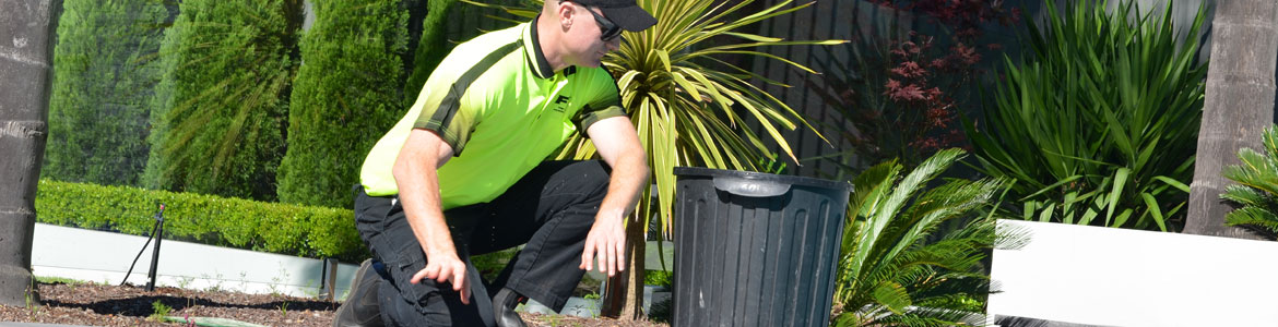 Cleanup & Garden Maintenance