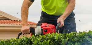Garden Clean Up Sydney